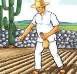 campesino sembrando